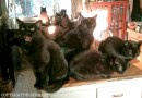 Eight black cats on Friday the 13th!