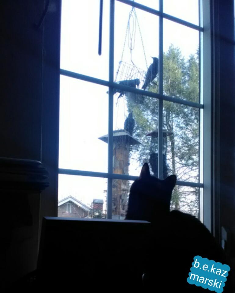 cat looking at birds