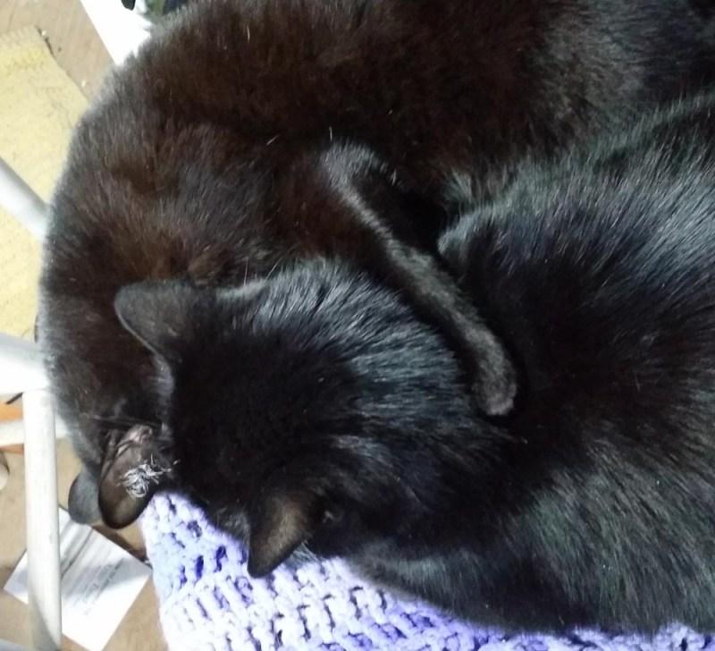 two black cats hugs