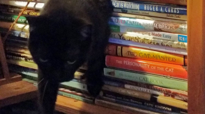 cat walking through books.