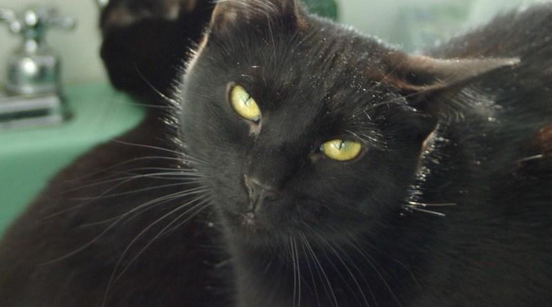 black cats in sink