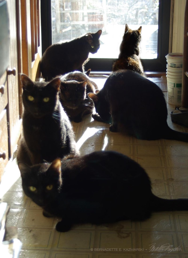 six cats in one photo