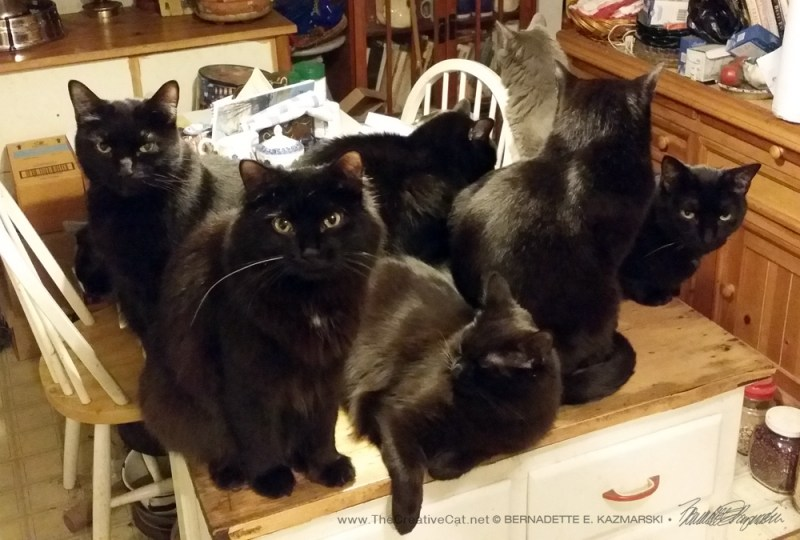 Eight cats, including Simon and Theo.