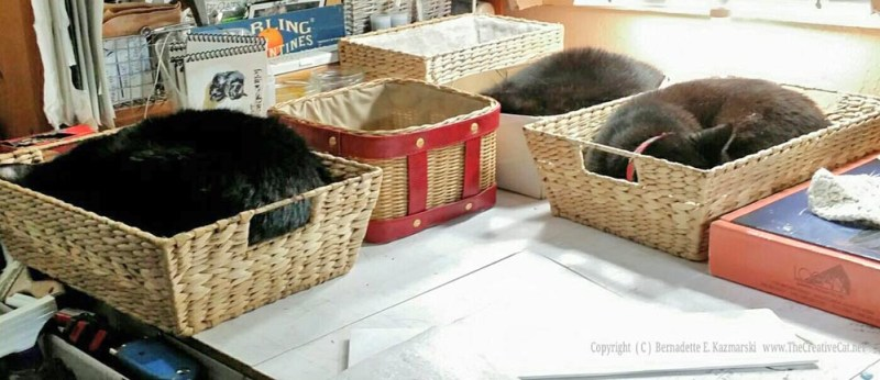 The cat loaves are rising in their baskets.