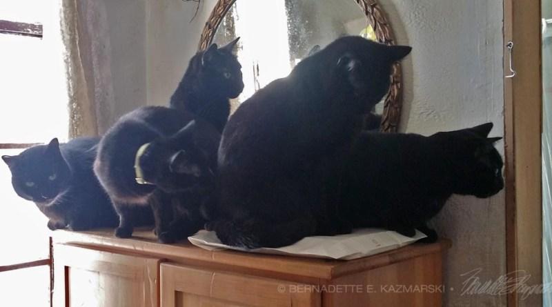 five black cats looking in doorway