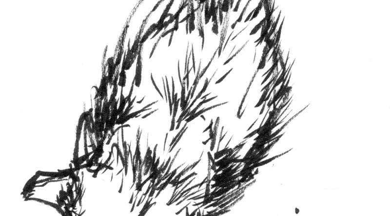 ink brush drawing of cat
