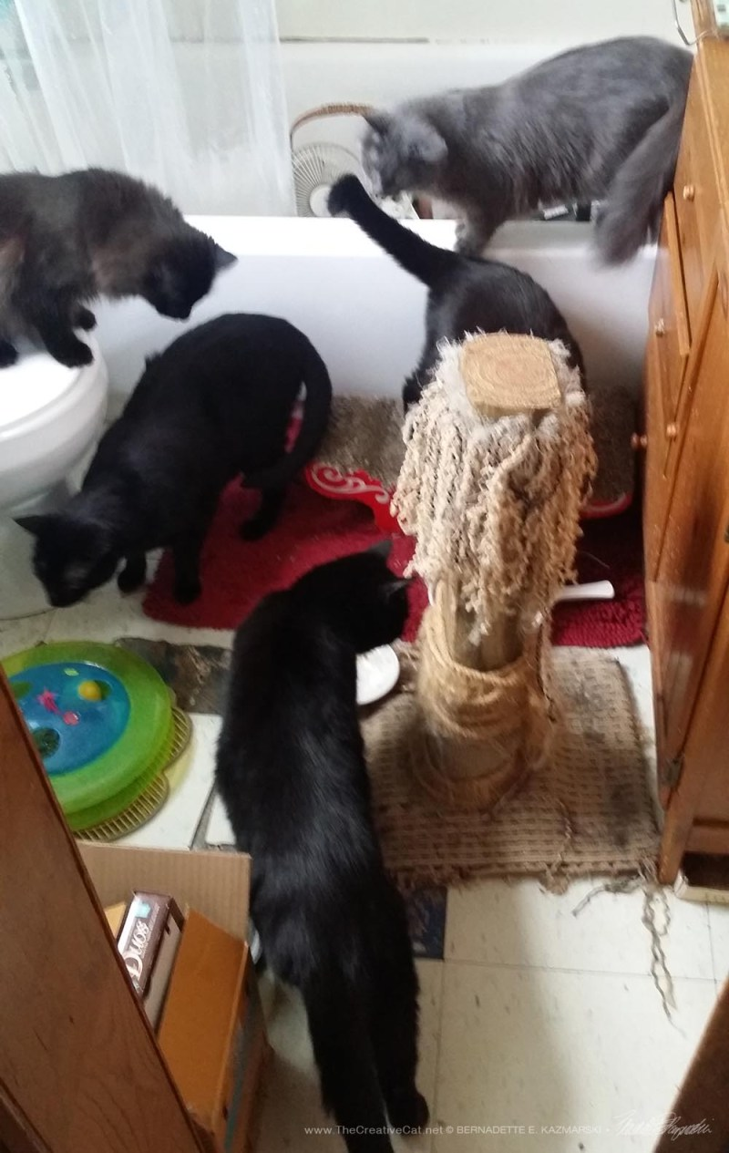A bathroom full of cats!