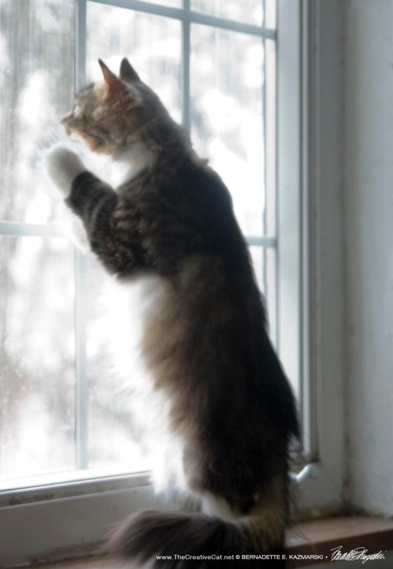 Mariposa chasing snowflakes.