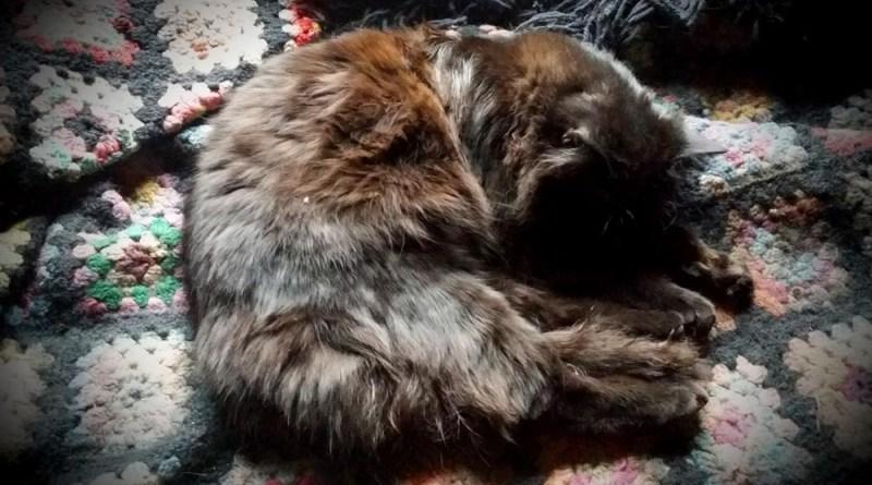 black cat on afghan