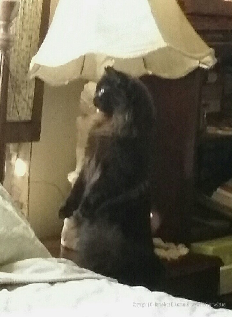 Hamlet sits up like a meerkat to see the squirrel in the tree outside the window.