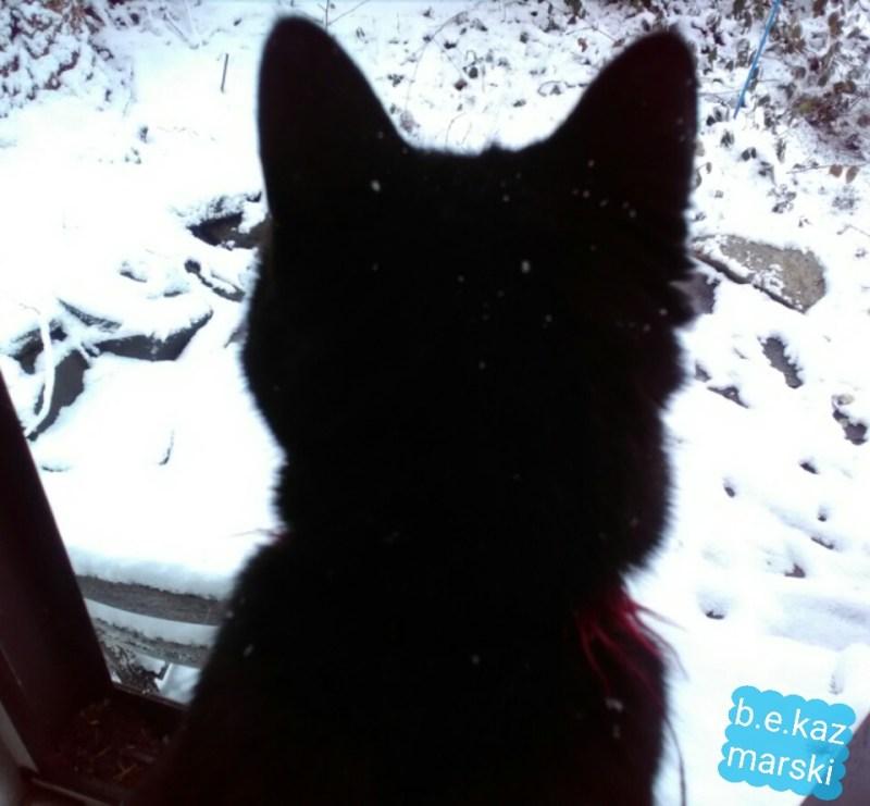 black cat with snow