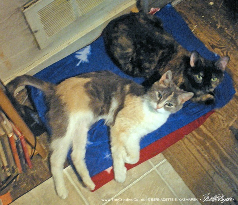 Peaches and Kelly cuddle in front of the furnace vent on a cold February night.