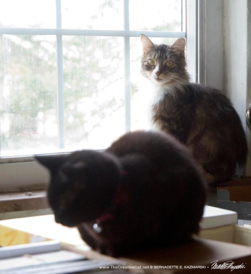 two cats by window