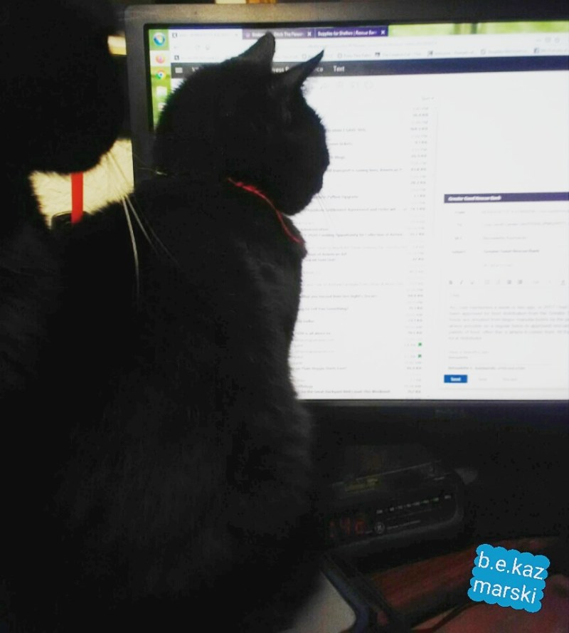 black cat reading email