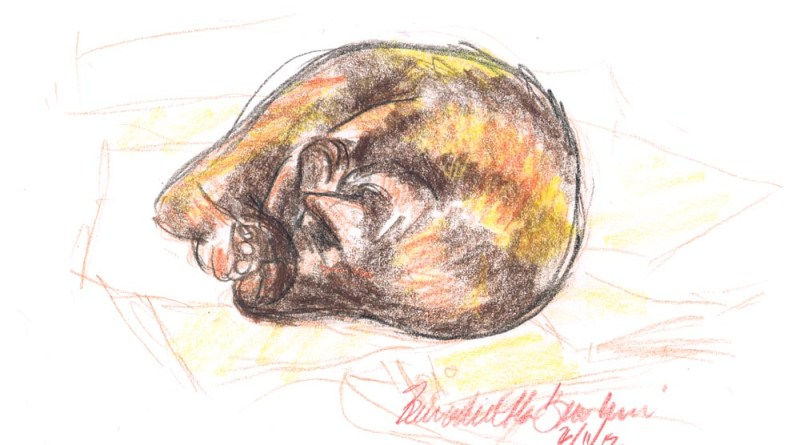 colored pencil sketch of tortoiseshell cat