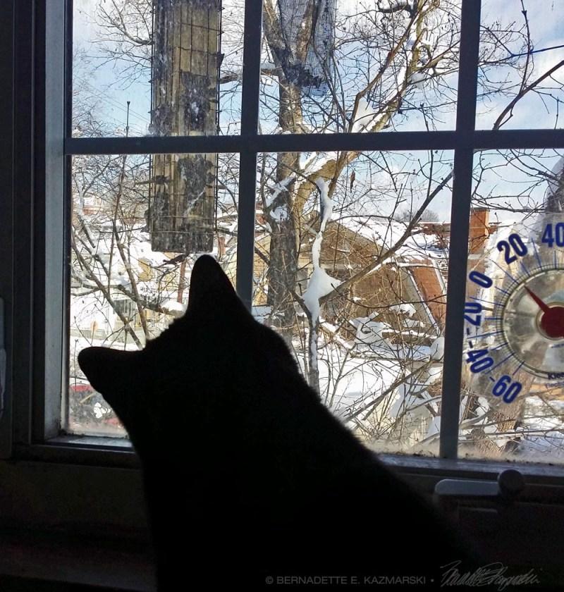 Mewsette wants to meet the little birdie.