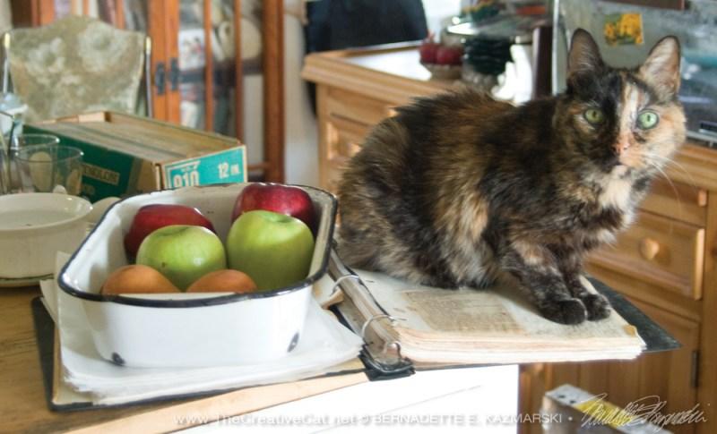 tortoiseshell cat on cookbook