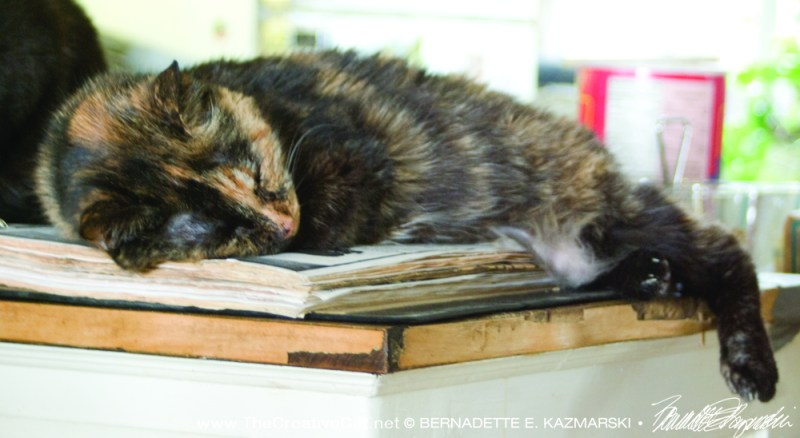 tortoiseshell cat sleeping on cookbook