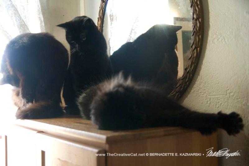 three black cats at window