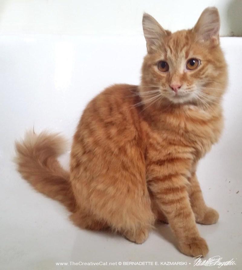 orange cat in the tub