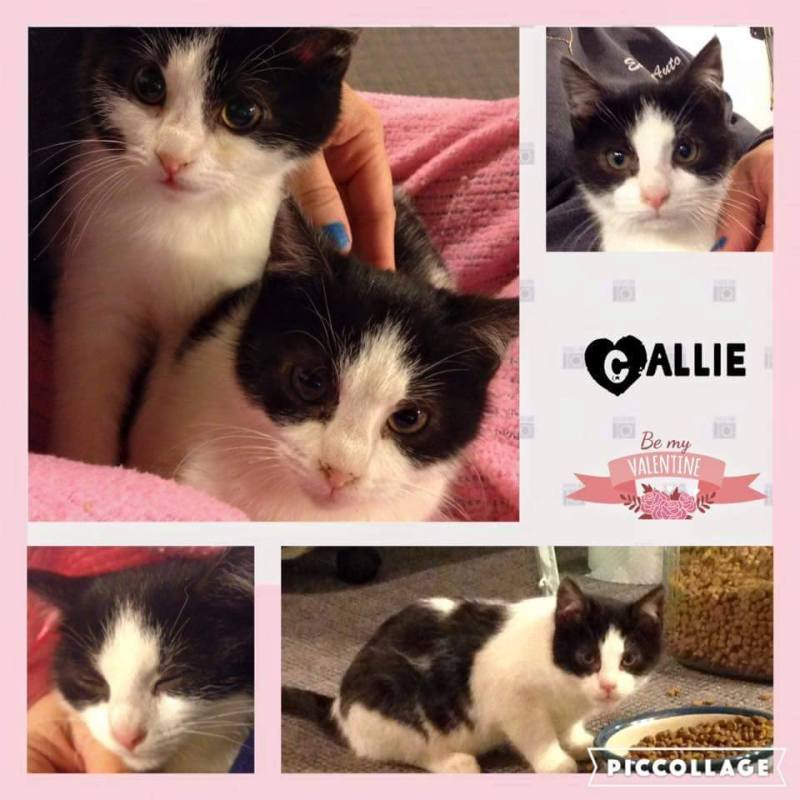 Sweet Callie with her sister Lotus.