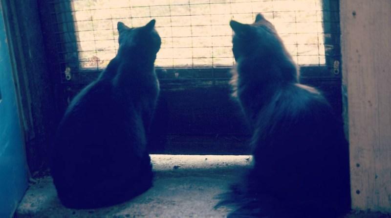 Bella and Hamlet at the basement door.