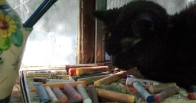 Mimi naps on the light-colored pastels.