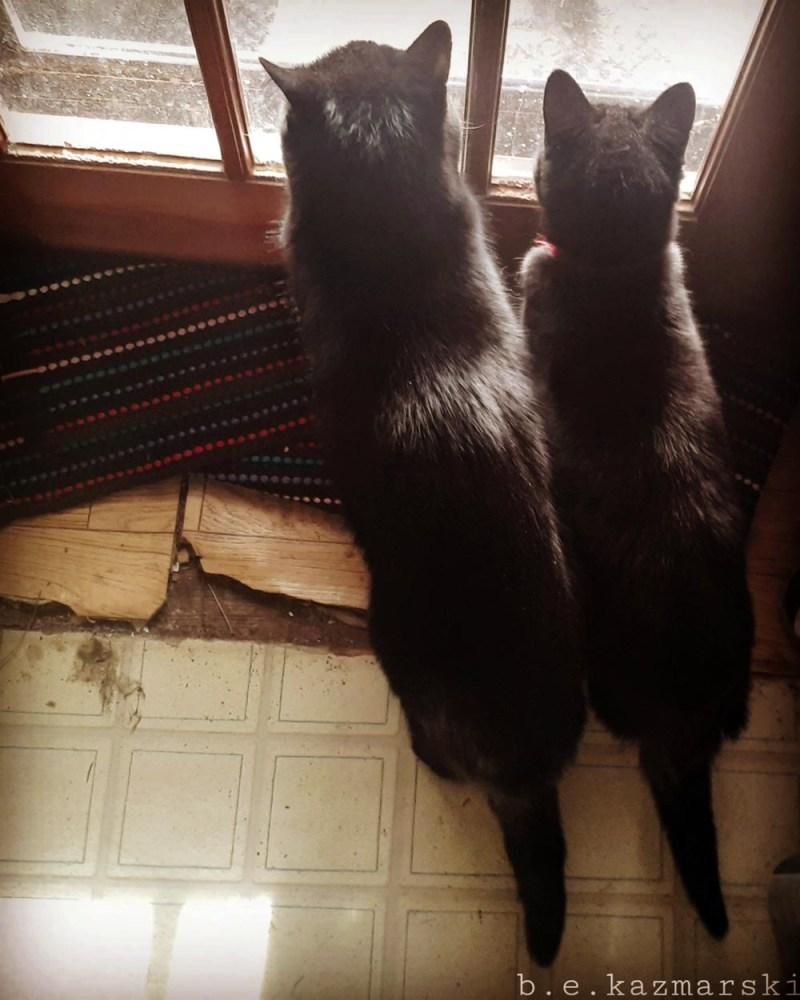 two black cats at door