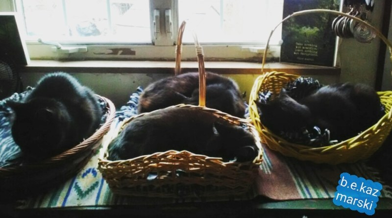 four black cats in baskets