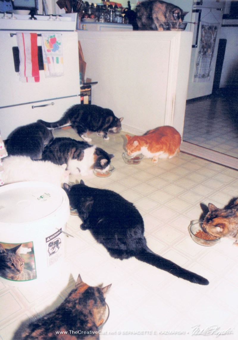 nine cats eating dinner