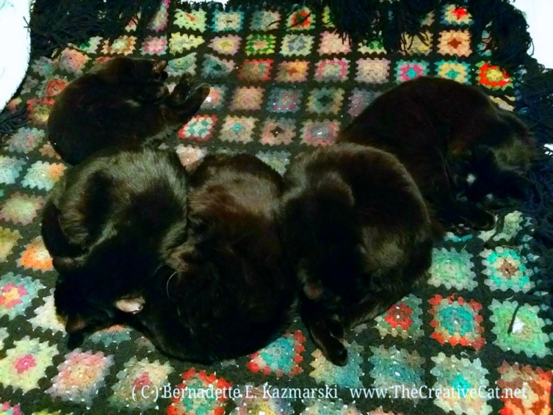Five black cats sleeping on the Afghan
