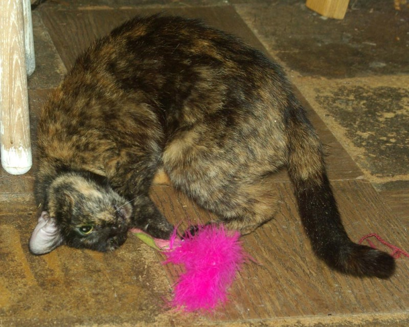 A little bit of catnip does wonders for a shy cat.