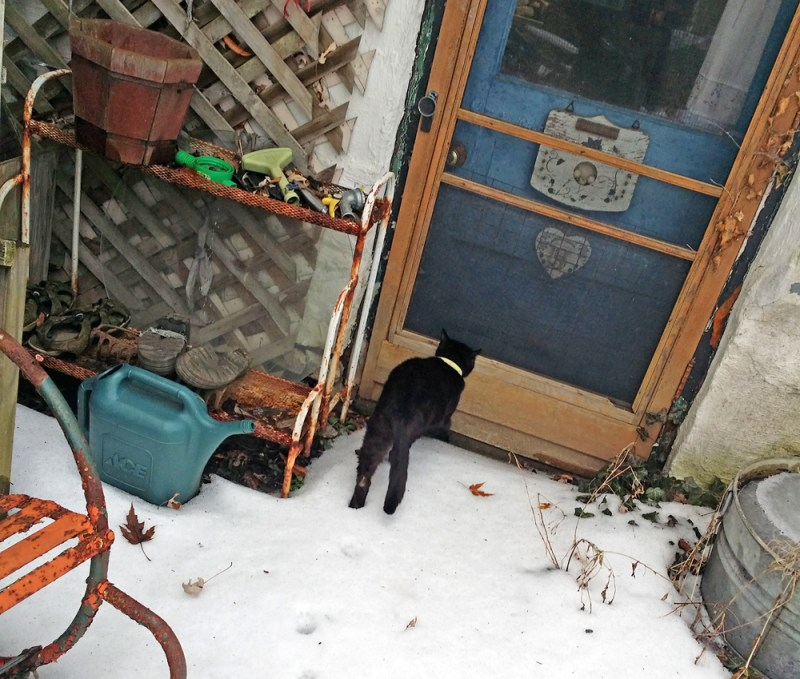 black cat looks in screen door