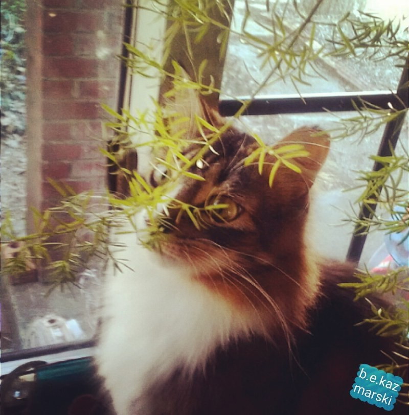 tabby cat behind plant