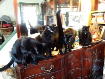 five black cats on dresser