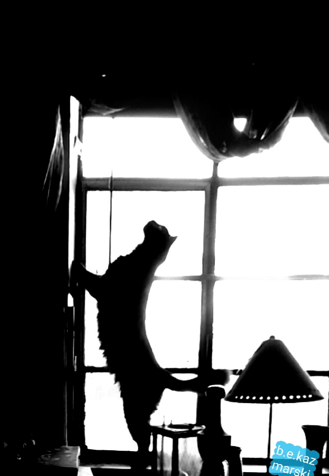cat silhouetted against window