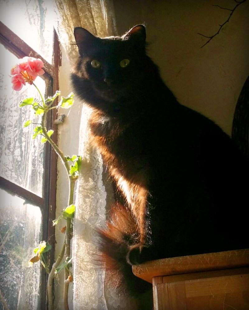 Basil and the geranium