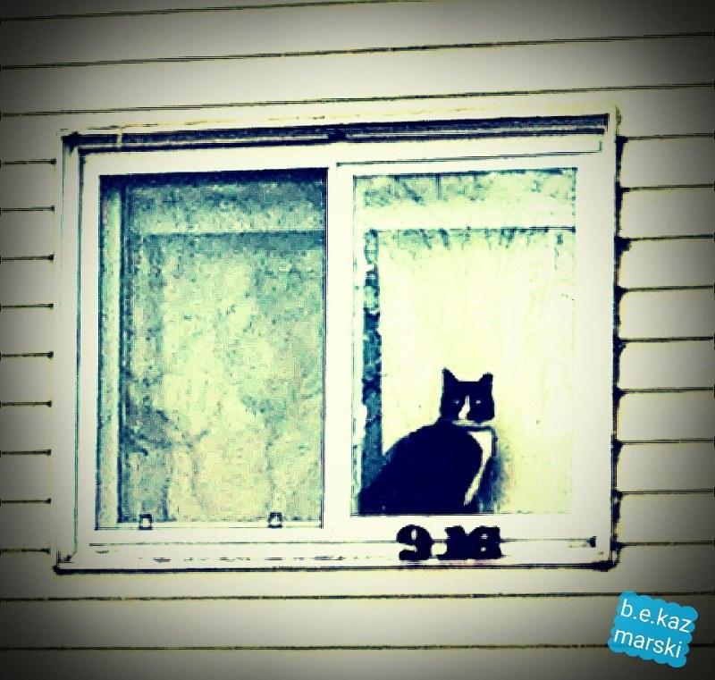 tuxedo cat in window
