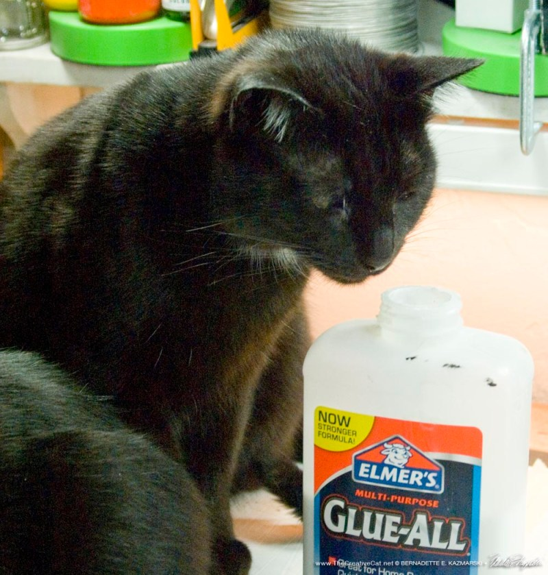 black cat Sniffing glue