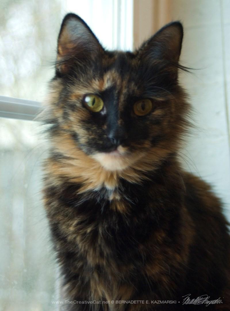 Meet Josephine!