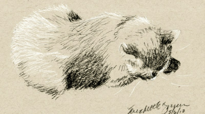 charcoal sketch of cat on toned paper
