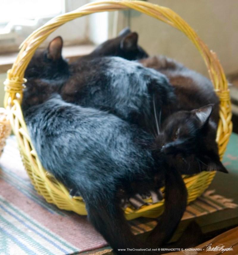 My basket overfloweth.