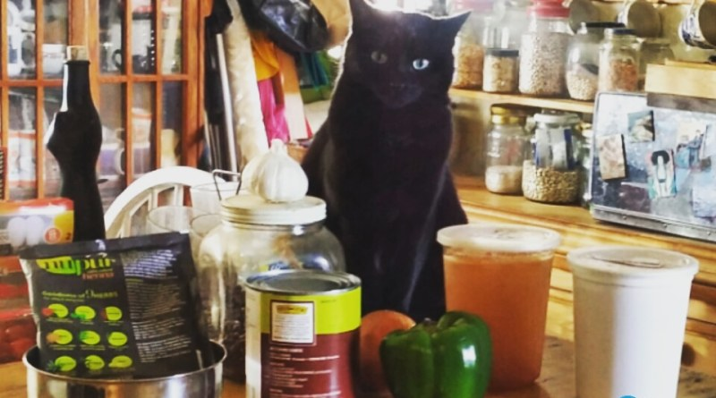 black cat in kitchen