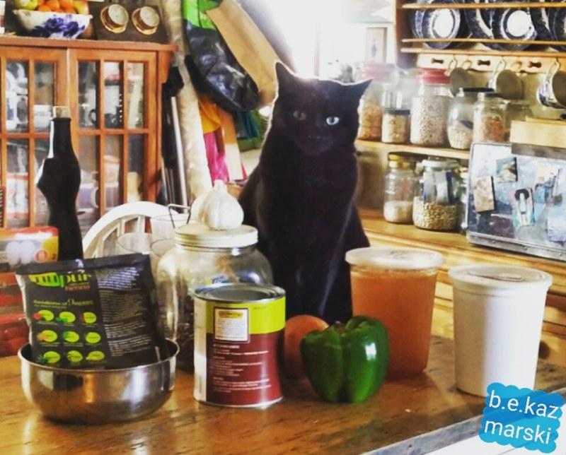 black cat in kitchen
