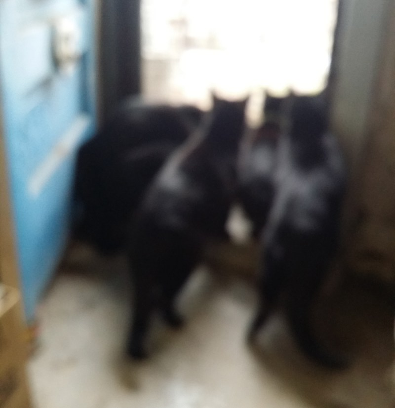 five black cats looking out door