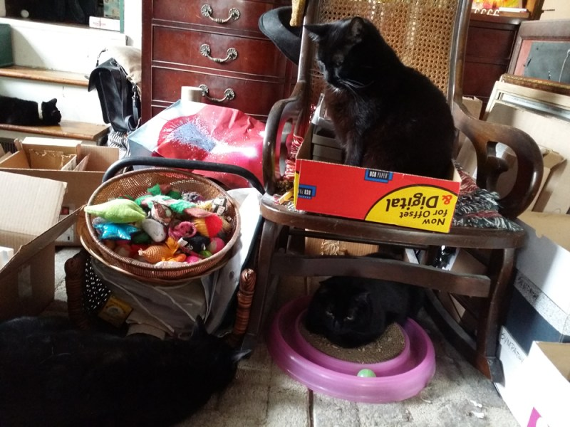 three black cats with stuff
