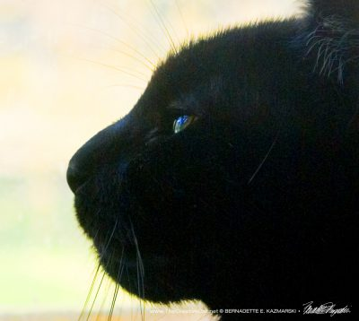 Watching the World in profile.