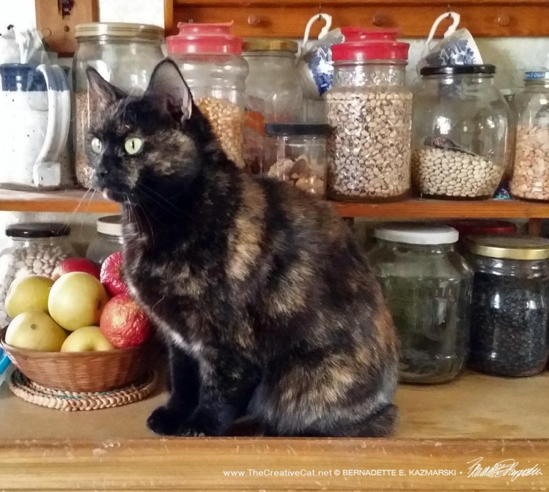Sienna on the bean counter.