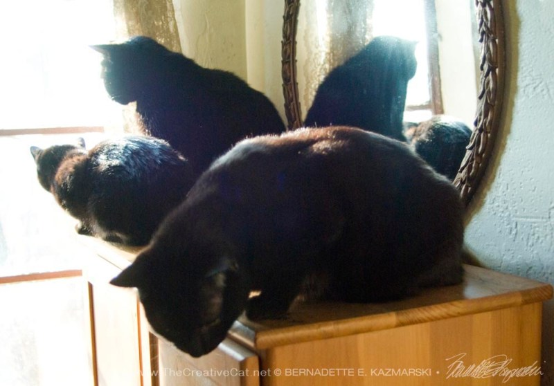 Mimi and Mewsette look out the window and reflect in the mirror while Bean provides a shape for an interesting composition.