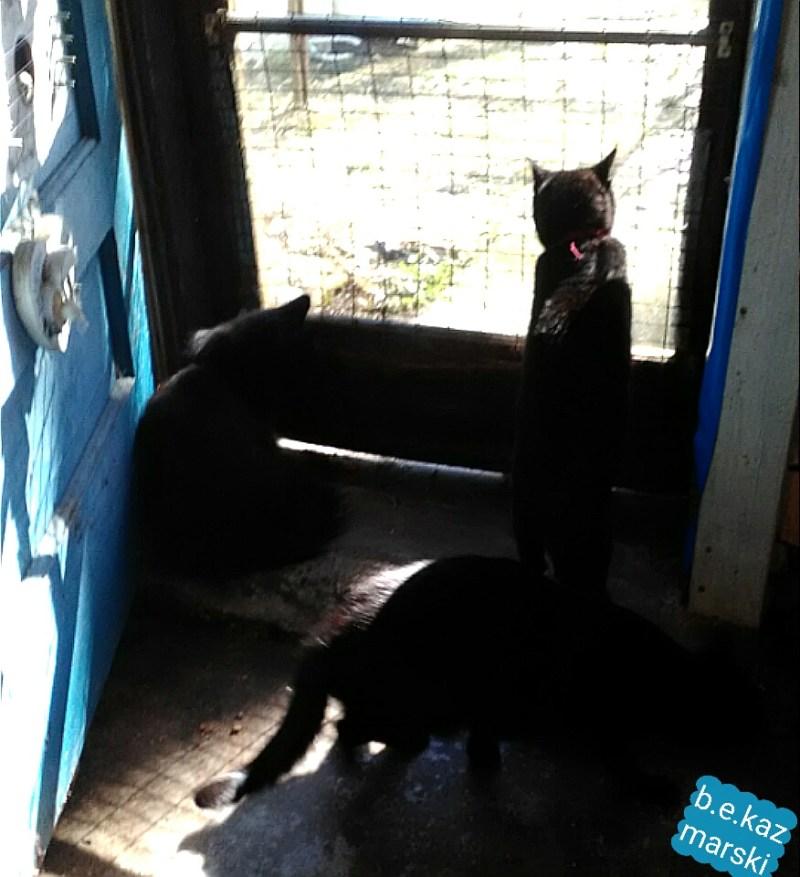 cats at door